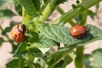 O pesticidech, škůdcích, užitečném hmyzu a doprovodných rostlinách