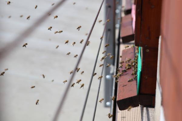 Včely slaví – slavte s námi nejen na Medovém dni v muzeu