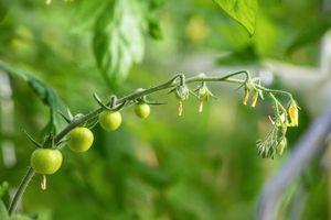 Výstava Ovoce a zelenina, ať je léto nebo zima