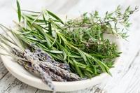 Bylinky a koření nejen pro gastronomii
